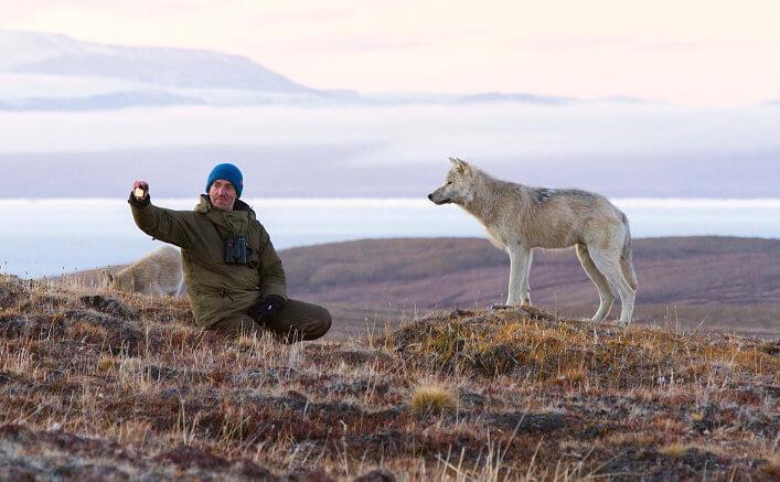 Gordon og de arktiske ulvene