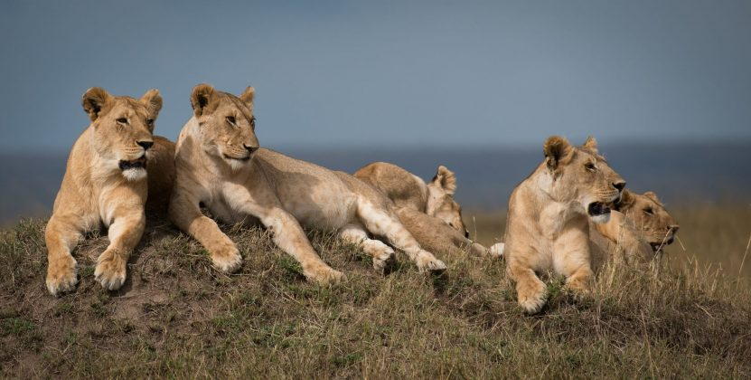 Dynasties. Foto: BBC Earth