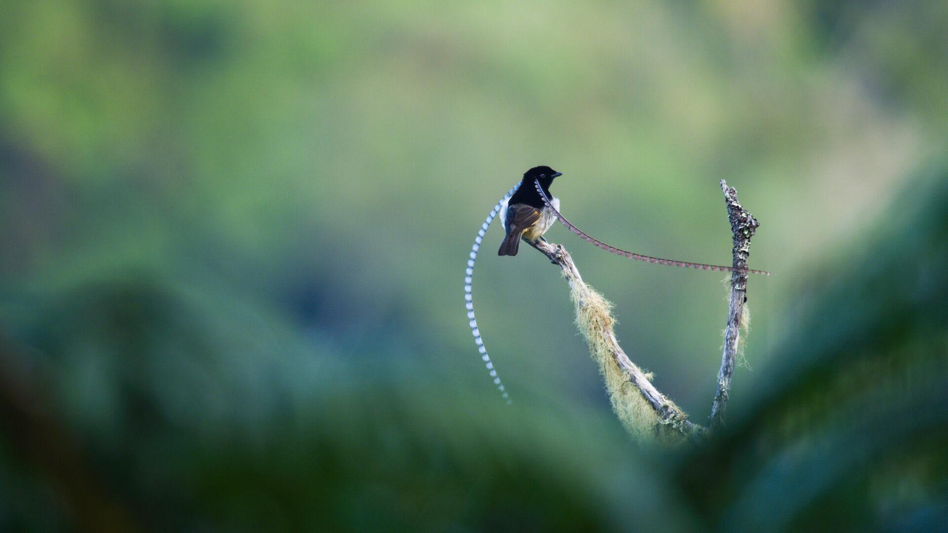 Dancing with the Birds. Foto: Netflix